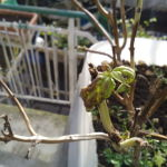 Recensione Wiko Bloom IMG_20141226_145200