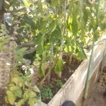 Recensione Wiko Rainbow JAM IMG_20151016_162810_1